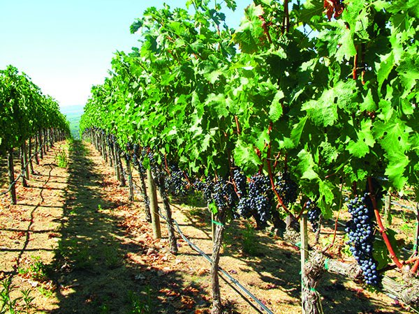 Lakeridge Winery Amp Vineyards Orlando Tickets Hotels
