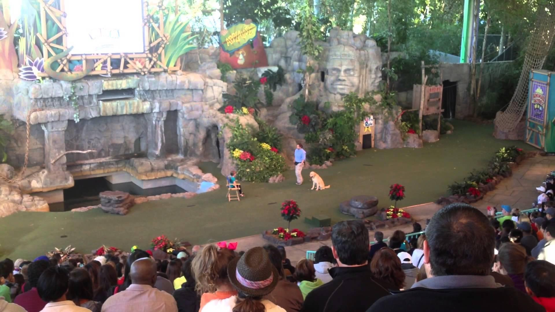 Animal Actors On Location Orlando Tickets Hotels Packages