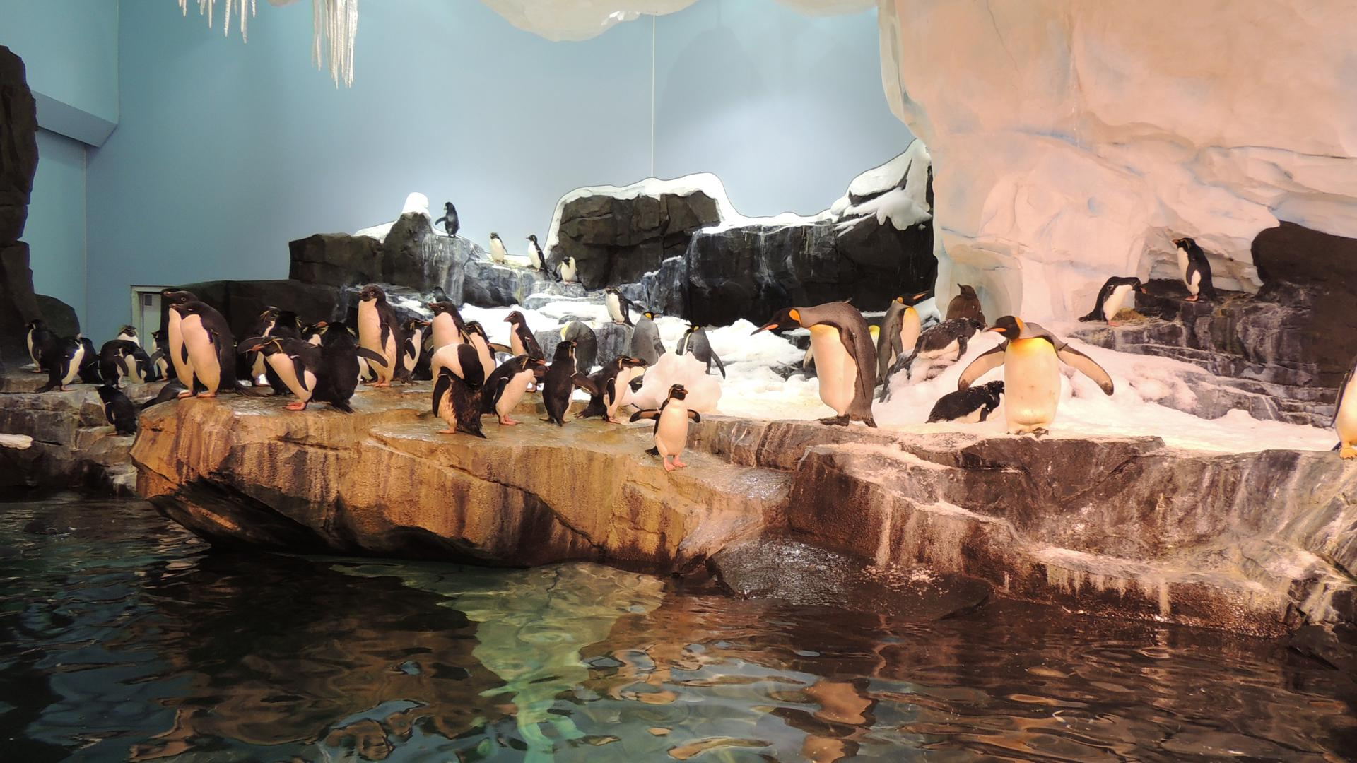 Antarctica Empire Of The Penguin Orlando Tickets Hotels Packages