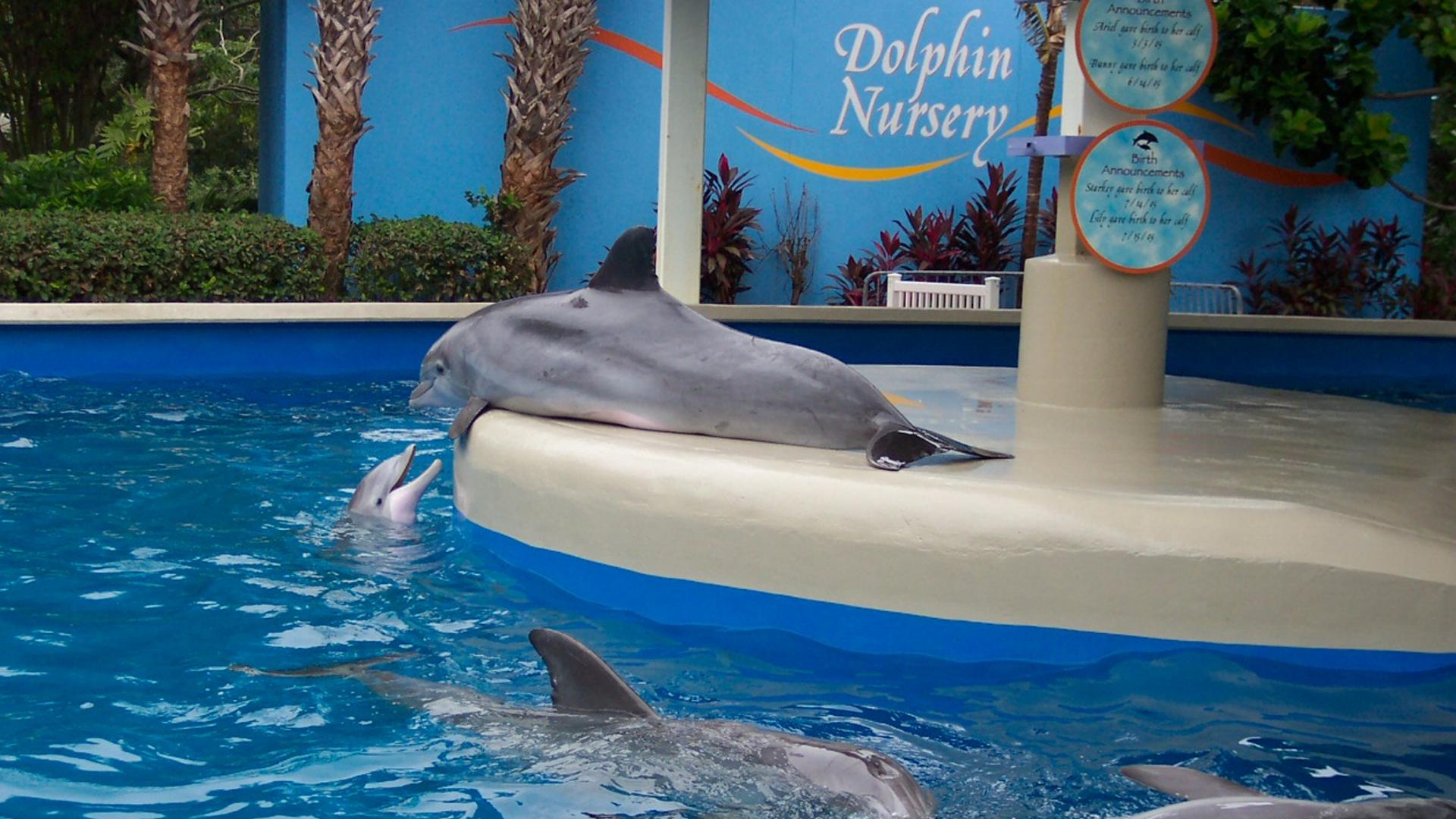 Dolphin Nursery Orlando Tickets Hotels Packages