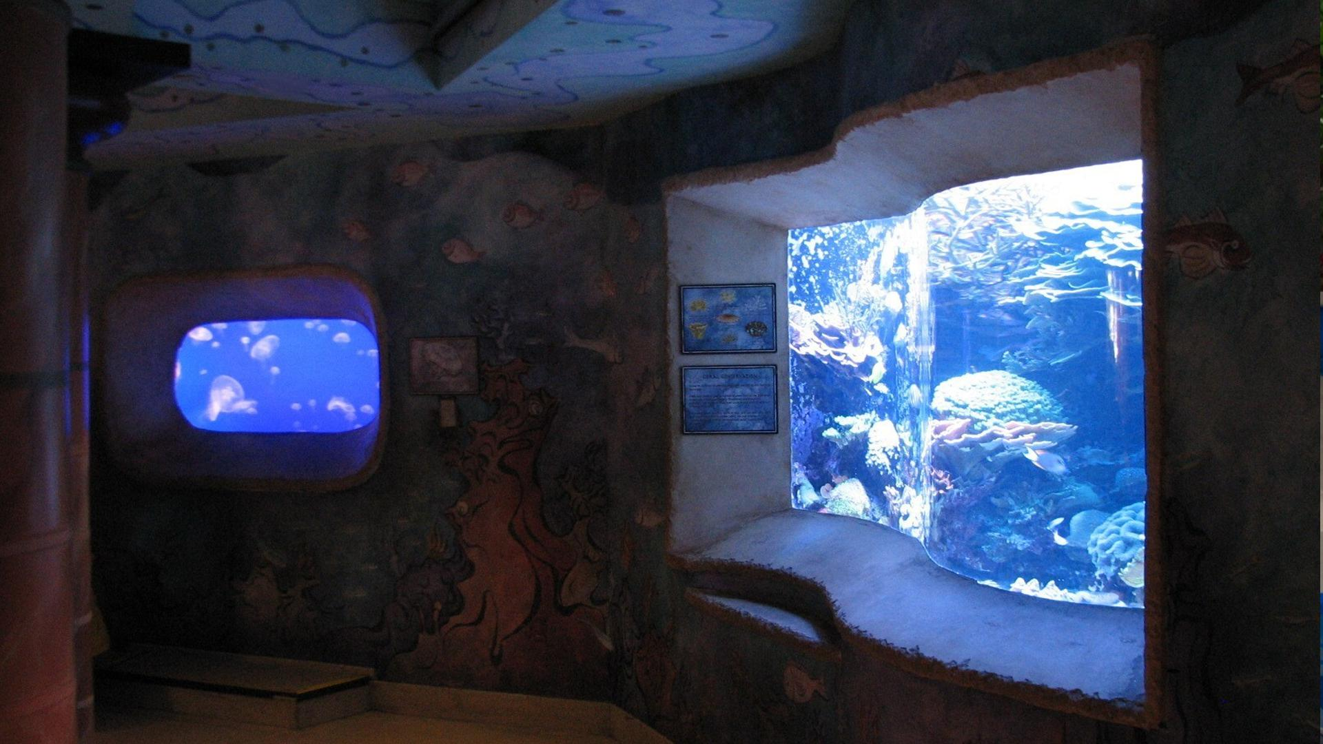 Jewel Of The Sea Aquarium Orlando Tickets Hotels Packages