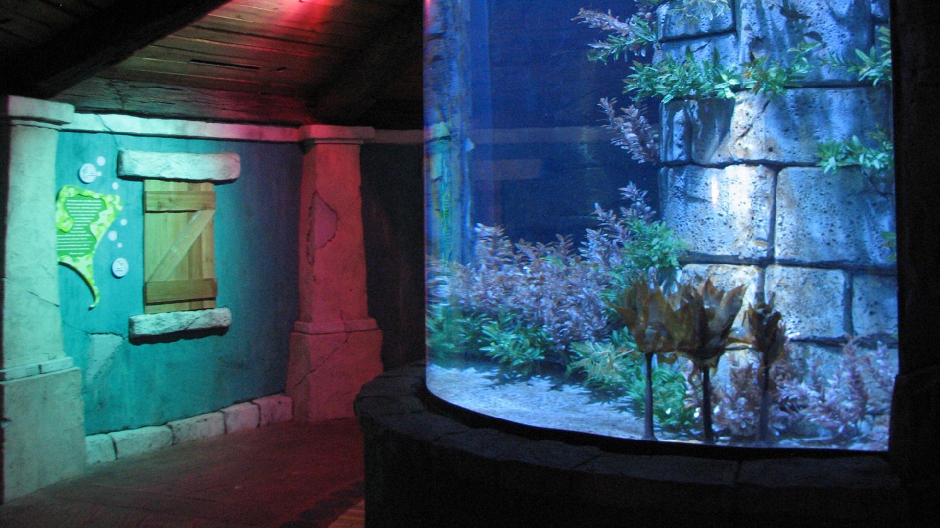 Manta Aquarium - Orlando Tickets, Hotels, Packages