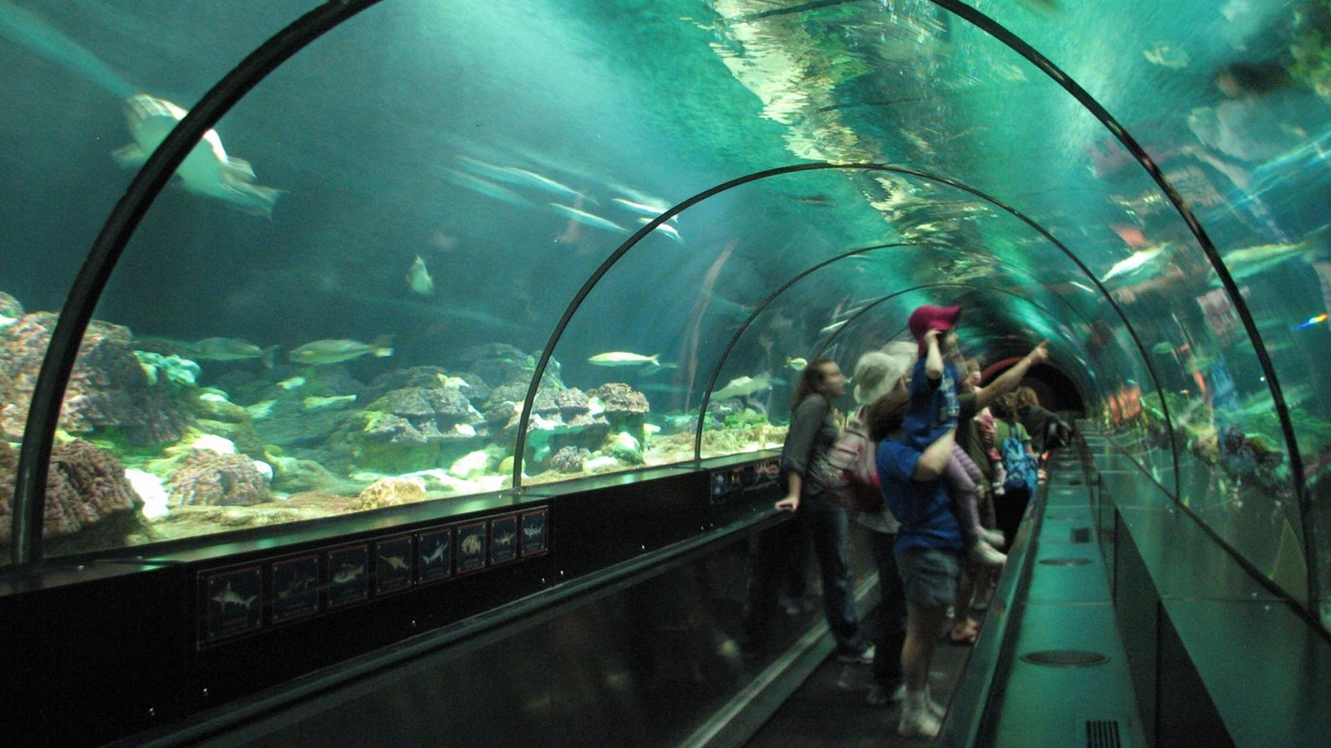 Shark Encounter - Orlando Tickets, Hotels, Packages Underwater Fish Tumblr