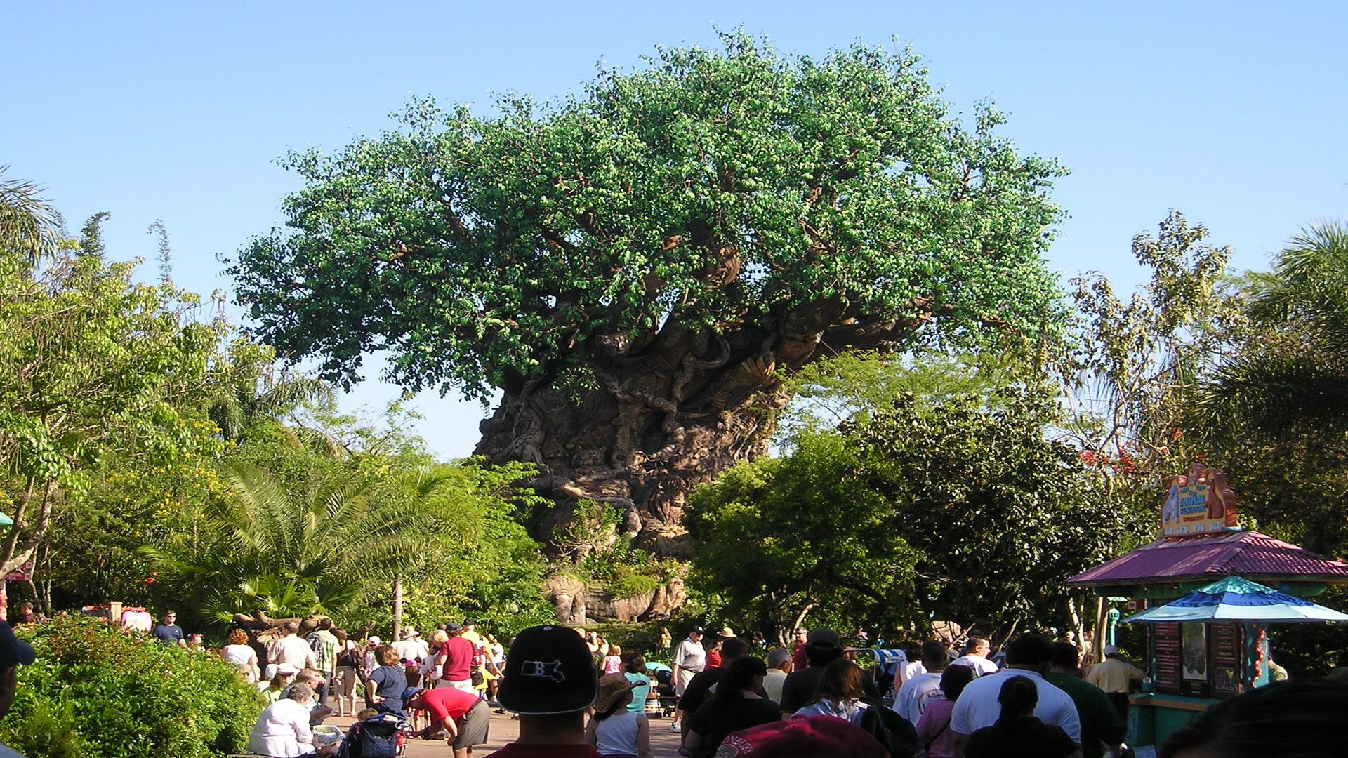 Tree Of Life Orlando Tickets Hotels Packages
