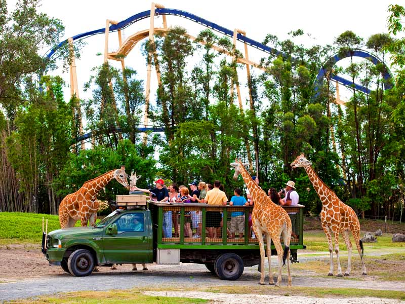 Busch Gardens Tampa Orlando Tickets Hotels Packages