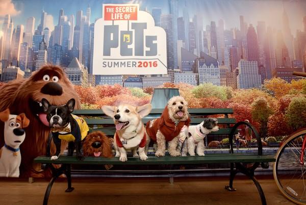 Secret_Life_of_pets_park_bench_8WuWCI.jpg