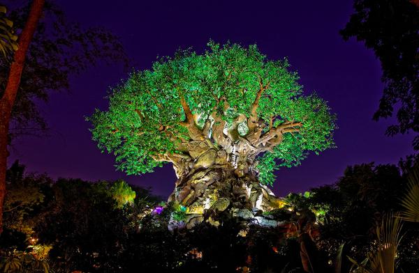 Drones Fly Over The Tree Of Life At Disneys Animal Kingdom To Celebrate Pandora World Avatar