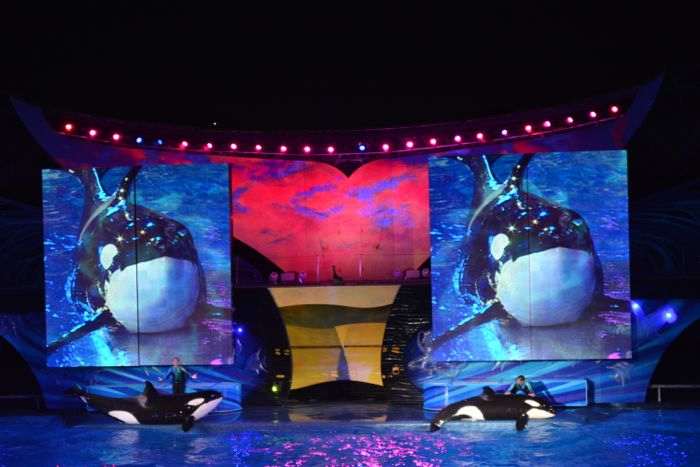 seaworld-orlando-show