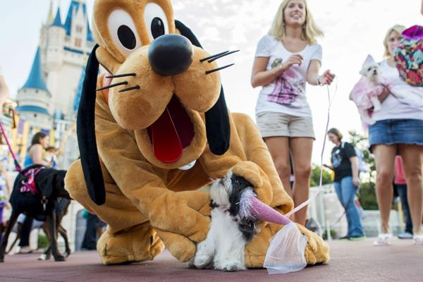 Image result for disney world dogs