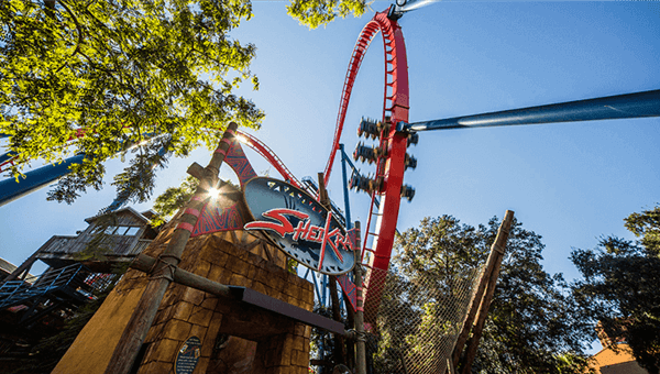 Top 5 Roller Coasters Of Busch Gardens Tampa