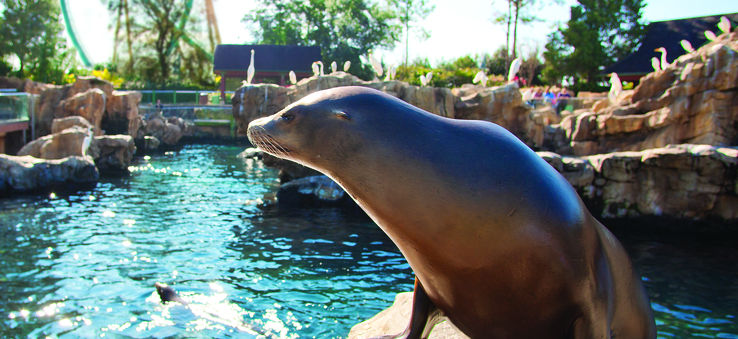 Seaworld Pacific_Point_Preserve
